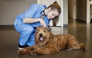 Scholarships and Financial Aid for Veterinary Students